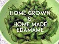 Growing Soybeans for EDAMAME