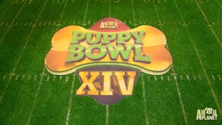 See The Puppy Bowl Stadium Built From Scratch In This Timelapse Video