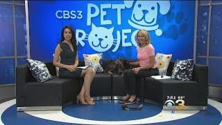 CBS 3 Pet Project: Pets And The Solar Eclipse