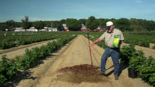 How to Plant Blueberries by Nourse Farms.