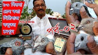 High flying racer pigeons || Part 2/2  || ৮০ কিলো রেস করার গিরিবাজ কবুতর