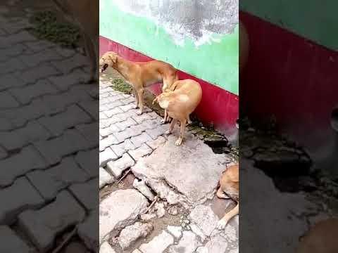 Xxx Mp4 Raju Ne Kutia Aur Kutte Ki Chodai Karwayi 3gp Sex