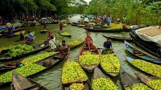 Barisal backwater and biggest floating market trip|Floating Market Bangladesh