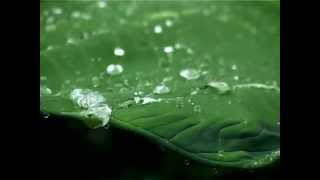 Best Rain Video | Natural Videos | Rain Video Clips