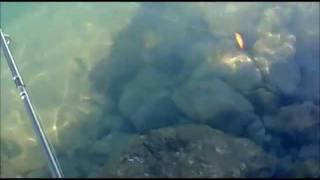 RAPALA X-RAP HH SEA BASS LURES