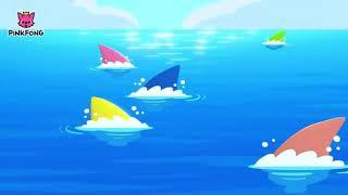Babj shark shark shark shark shark