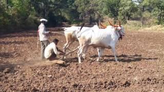 Sarjya Rajya