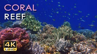 4K Coral Reef - Tropical Fish - Underwater Ocean Sounds - Relaxing Nature Video - Ultra HD - 2160p