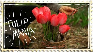 Growing Tulips, How a Cut Flower Collapsed the Economy