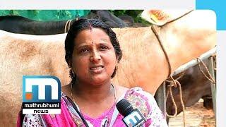 Udayasree And Her Cattle Farm| Mathrubhumi News