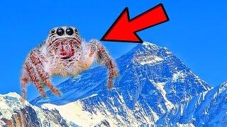 12 Rare Creatures of Nepal
