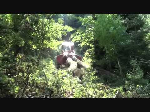 Tree logging Zrywka drewna Bieszczady