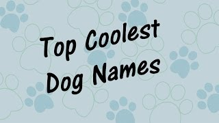Top COOLEST DOG NAMES!  Best Pet Names! 🐶
