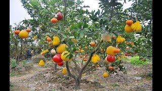 WOW! Most Amazing Fruits & Vegetables Farming Technique - Agriculture Technology