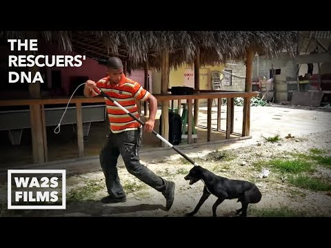 We Cried A Lot In This Famous Resort Town Watching Them Pick Up Homeless Dogs Ep8 The Rescuers DNA
