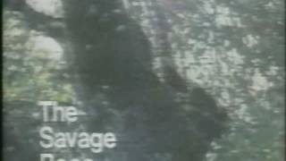 NBC promo The Savage Bees & WMAQ News update1976