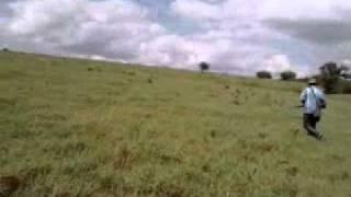 CAÇADA DE PERDIZ EM OLHO D'ÁGUA GRANDE-AL