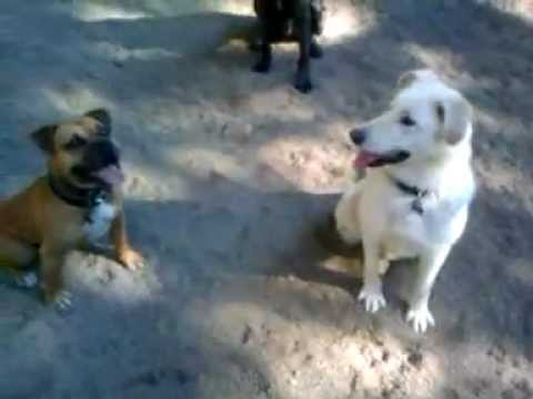 Xxx Mp4 Foster Dogs Katie And Taz Playing 3gp 3gp Sex