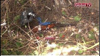 HATARI: Polisi Mwanza Wakuta Silaha ya Kivita Shambani!