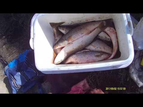 рыбалка в крыму пеленгас видео