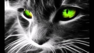 Flo rida Feat Akon Liz Elias At night - Audio
