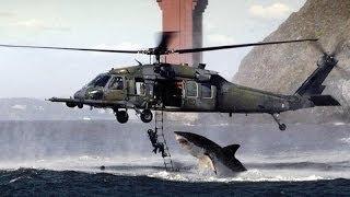 attaque de requin en mer