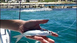 EPIC Bait Migration! (Drone Mullet Run Fishing 2018)
