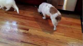 Dog waits for the cat