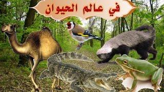 شرح درس في عالم الحيوان -الضفادع والتماسيح والغرير والجمل - لغة عربية للصف الرابع الابتدائي