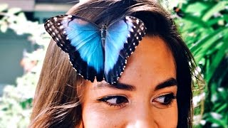 This Butterfly Landed On Her Face