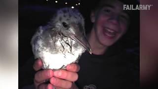 Seagulls Are Jerks!!!