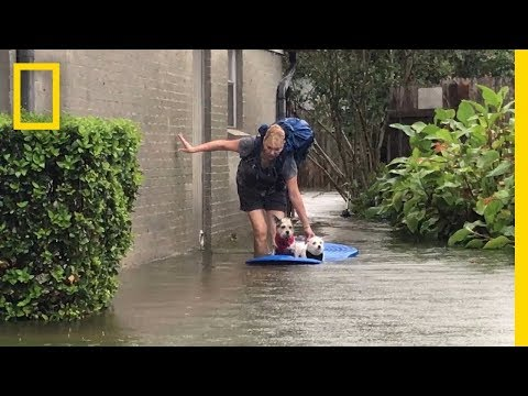 Watch Photographer Evacuate Mom and Dogs From Harvey s Devastating Flooding National Geographic