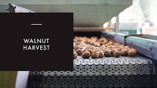 California Walnut Harvest Tour