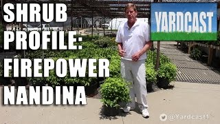 Shrub Profile - Firepower Nandina
