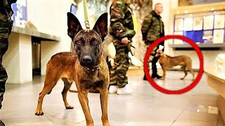 Russia is CLONING MEGA Military Dogs