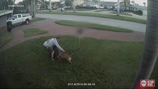 Video captures dog attack in St. Petersburg, child tries to break it up