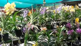 Kebun bunga orkid ku
