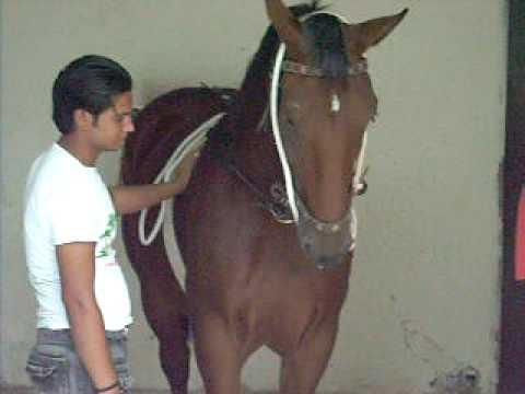 Zuljanah Ashal Badsha
