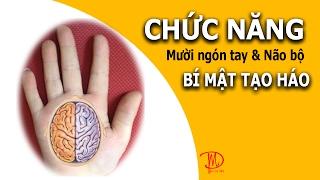 Vlog Bí Mật Tạo Hóa:_Khám Phá Tiền Ẩn Mười Đầu Ngón Tay_Online Education