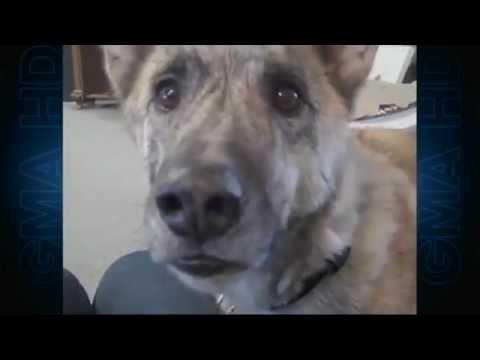 Xxx Mp4 Ultimate Dog Tease Video Becomes Viral Sensation Episode 1 Cute Animals ABC News 3gp Sex