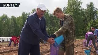 Lukashenko digs in: Belarus president helps harvest 105 tons of potatoes
