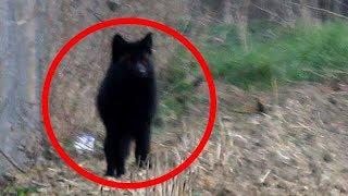 5 مقاطع ومشاهدات يُعتقد أنها لكلب الجحيم..!!