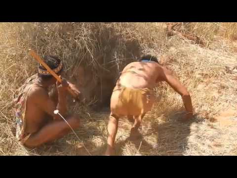 Xxx Mp4 Primitive Tribes In The Heart Of The Kalahari Desert Part 5 Porcupine Hunting 3gp Sex