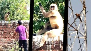 Funny Incident of Crazy Monkey# | Jumping On TOWER & Having Fun On Ground |  New Prank Movie @@#