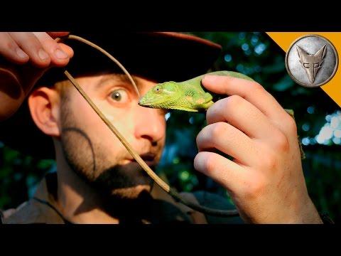 Monkey Tailed Lizard