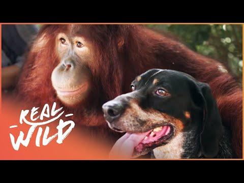 Oddest Friendships Between Animals Animal Odd Couples Real Wild