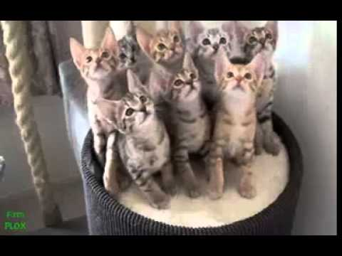 Best Funny Animal Videos Compilation 2014