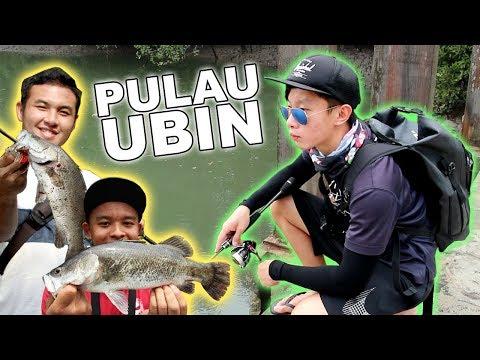 MANGROVE FISHING for BARRAMUNDI at PULAU UBIN