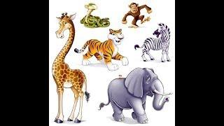 Animal Names | ABCD Alphabet Songs | ABC Songs for Children - 3D ABC Nursery Rhymes