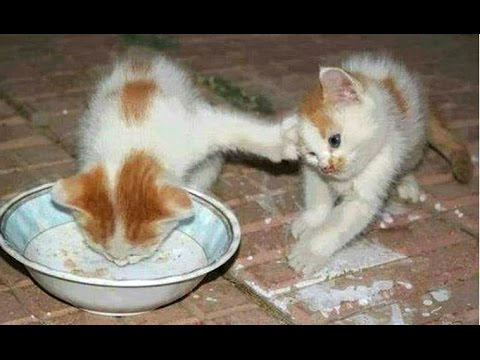 Funny Cats And Kittens Who Don t Want To Share Their Food Compilation BEST OF